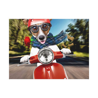 Scooter dog ,jack russell canvas print