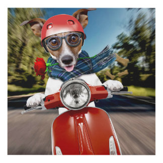 Scooter dog ,jack russell panel wall art