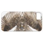 Scops-búho eurasiático - scops del Otus (2 meses) iPhone 5 Funda