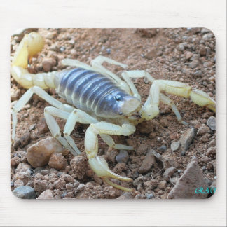 scorpion 343 mouse pad