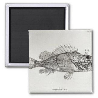 Scorpion Fish Magnet