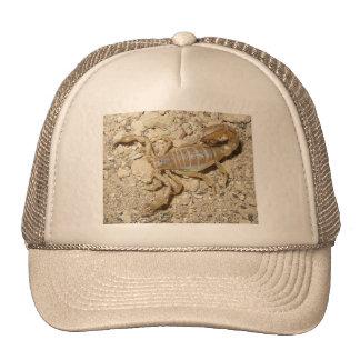 Scorpion Hat