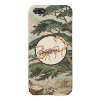 Scorpion In Natural Habitat Illustration Covers For iPhone 5