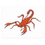 Scorpion ~ Insect Scorpio Scorpions Postcard