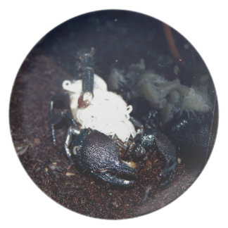Scorpion Mother and Children Dinner Plate