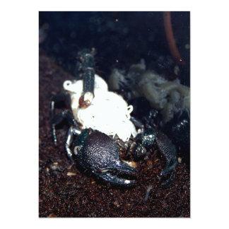 "Scorpion Mother and Children 5.5"" X 7.5"" Invitation Card"