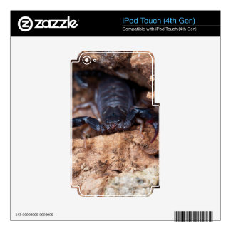 Scorpion of the species Euscorpius italicus iPod Touch 4G Decal