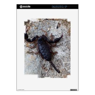 Scorpion of the species Euscorpius italicus Skins For iPad 2