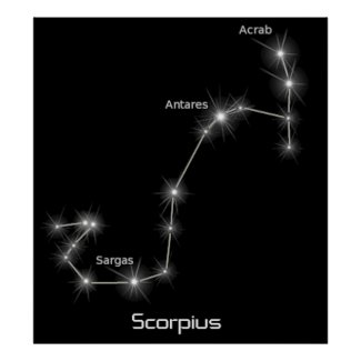 Scorpius Constellation Scorpio Zodiac Business Posters