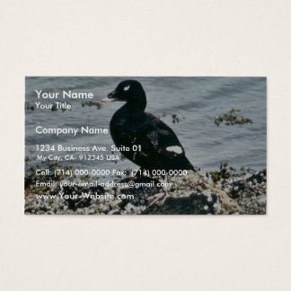 Scoter Ducks Business Card