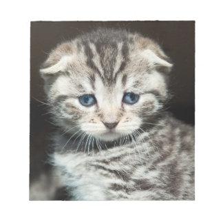 Scotish Fold Kitten Notepad