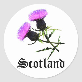 Scotland, thistle classic round sticker
