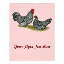 Scots Dumpy Chickens Flyer