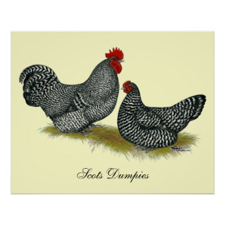 Scots Dumpy Chickens Poster