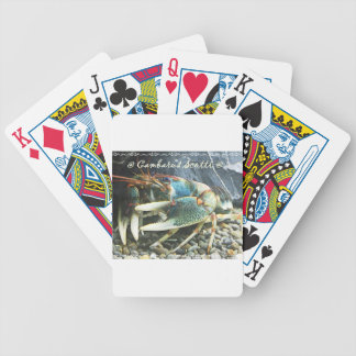 scotti1 bicycle playing cards