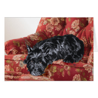 Scottie in a Big Red Chair Greeting Card