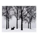 Scottie in Snowy Woods Postcard
