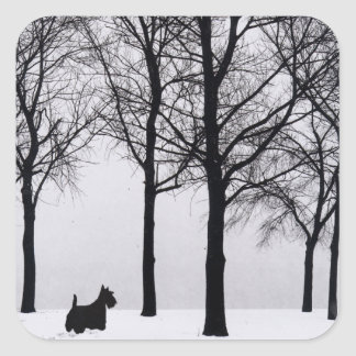 Scottie in Snowy Woods Square Sticker