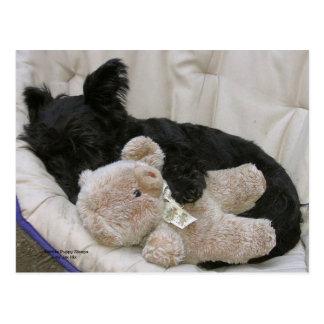 Scottie Puppy Sleeps Postcard
