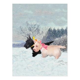 Scottie Pups Postcard