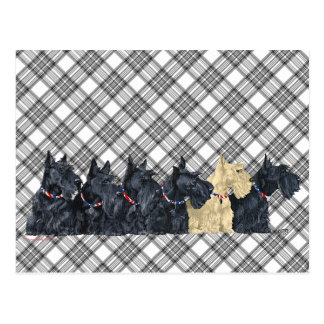 Scotties All in a Row Postcard