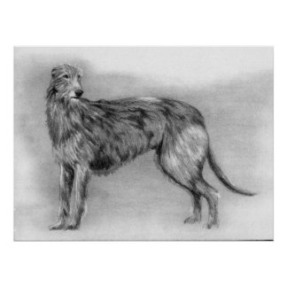 Scottish Deerhound Dog Portrait Print