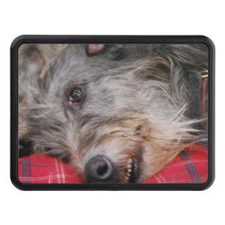 Scottish Deerhound Hitch Cover