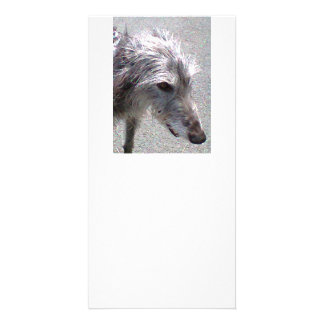 scottish Deerhound.png Card