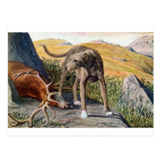 Scottish deerhound postcard