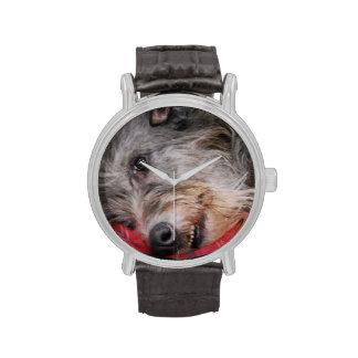 Scottish Deerhound Watch