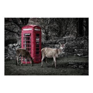Scottish Deers @ Red Telephone Box (Kiosk No 6) Poster