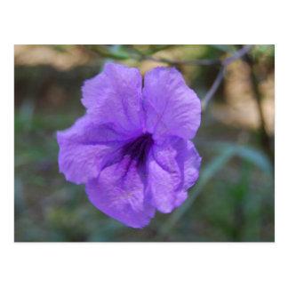 Scottish flowers- Scotland Postcard