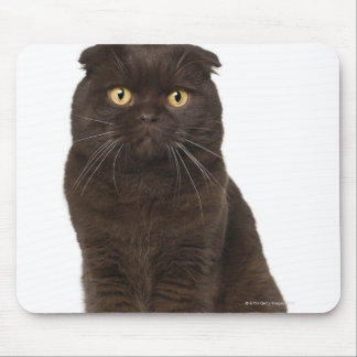 Scottish Fold (18 months old) sitting Mouse Pad