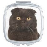 Scottish Fold (18 months old) sitting Mirror For Makeup