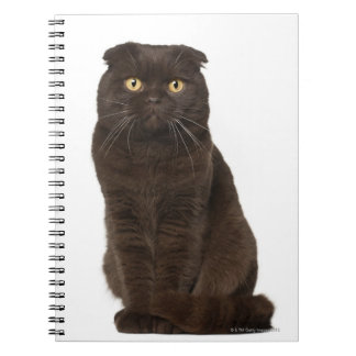 Scottish Fold (18 months old) sitting Spiral Notebook