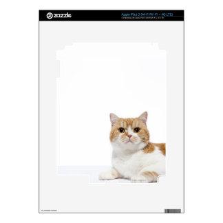 Scottish Fold Cat iPad 3 Decal