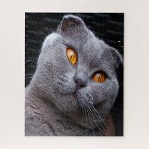 Scottish Fold Cat Pedigree Jigsaw Puzzle