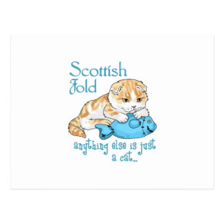 Scottish Fold Cat Postcard