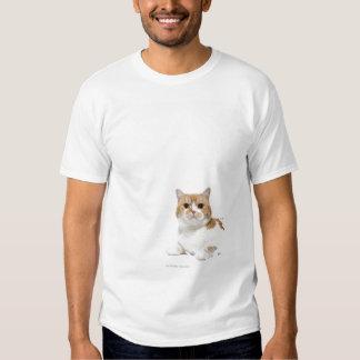 Scottish Fold Cat T Shirt