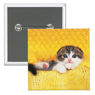 Scottish Fold; is a breed of cat with a natural 2 Inch Square Button