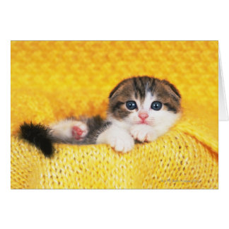 Scottish Fold; is a breed of cat with a natural Card