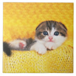 Scottish Fold; is a breed of cat with a natural Ceramic Tile