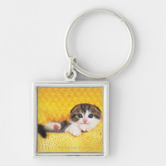 Scottish Fold is a breed of cat with a natural Key Chains