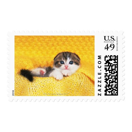 Scottish Fold; is a breed of cat with a natural Postage Stamp