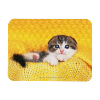 Scottish Fold; is a breed of cat with a natural Rectangular Photo Magnet