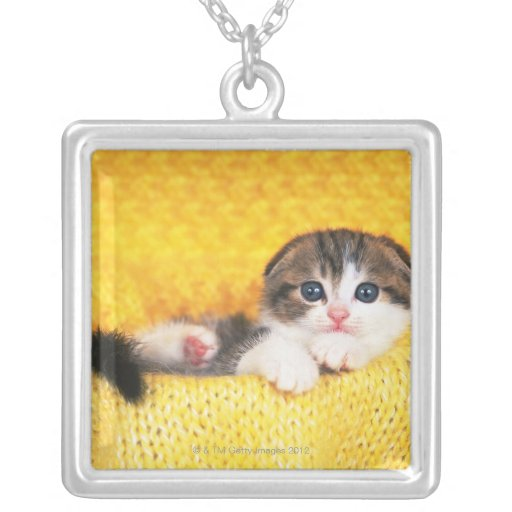 Scottish Fold; is a breed of cat with a natural Square Pendant Necklace