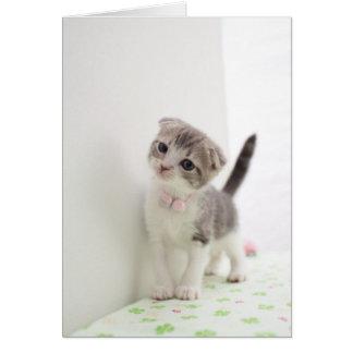 Scottish Fold Kitten Card