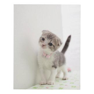 Scottish Fold Kitten Panel Wall Art