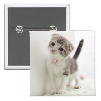 Scottish Fold Kitten Pinback Button