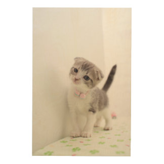 Scottish Fold Kitten Wood Wall Art